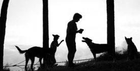 A szentendrei kutyaszánhajtó