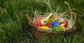 Húsvéti fészekrablás Szentendrén